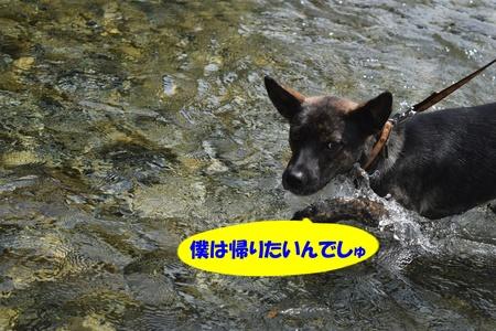 08-DSC_0016.JPG
