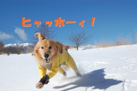 03-DSC_0019.JPG