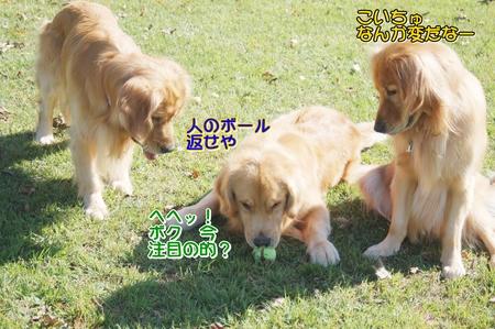08-コキアDSC_0204.JPG
