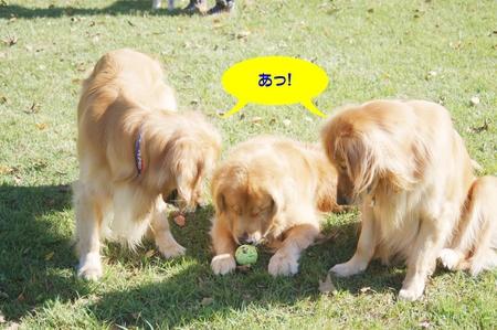 09-コキアDSC_0206.JPG