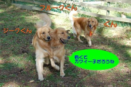 0913-ぐんとジークとフルーク-02.JPG