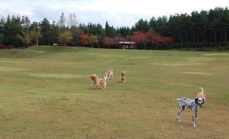 0913-2日目公園-01.JPG