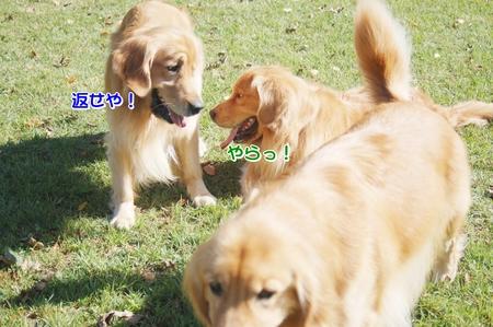 10-コキアDSC_0207.JPG