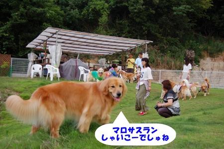 12-DSC_0068.JPG