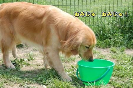 ぐんお水1-DSC_0095.JPG