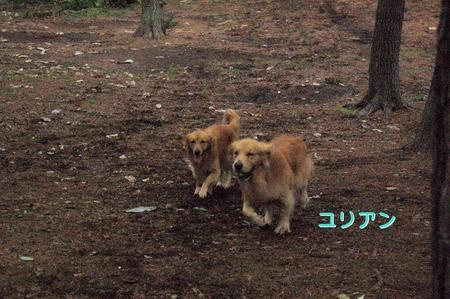 まきばの森06_DSC_0071.JPG