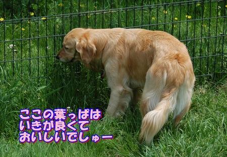 アメリ食事中-1-DSC_0022.JPG