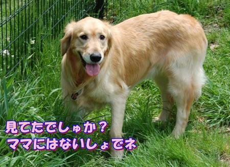 アメリ食事中-2-DSC_0035.JPG