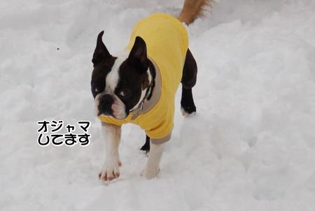 紹介マー君-01-DSC_0367.JPG