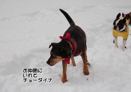 紹介宿の子-010-DSC_0348.JPG