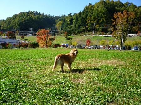 NO7-道の駅「南きよさと」南八ヶ岳花の森公園.JPG
